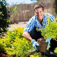 Ten Tips for Healthy Gardening